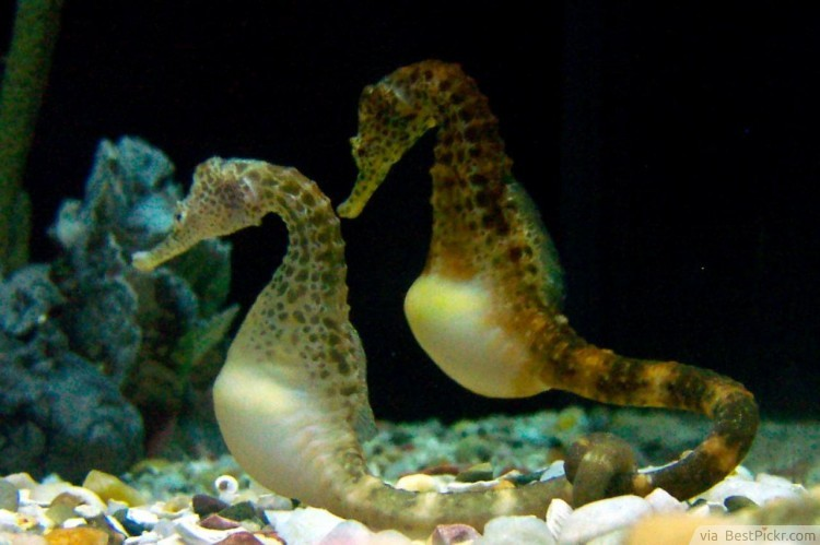 10 Fascinating Facts About Seahorses To Explore When Diving ...