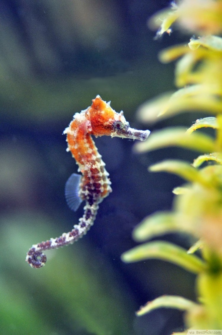 10 Cutest Baby Seahorse Pictures In The World Interesting Facts Bestpickr