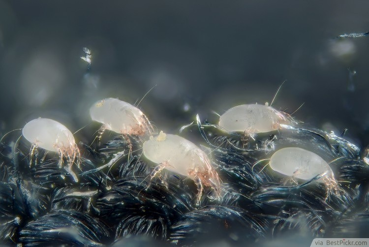 Creepy Things: Mattresses Weight Double Because Of Dust Mites ❥❥❥ http://bestpickr.com/stuff-you-should-know