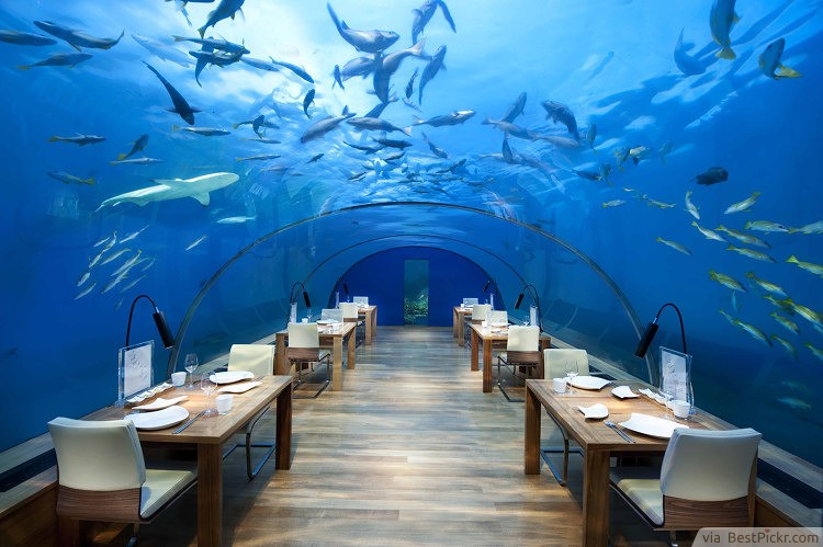 ithaa undersea restaurant maldives rangali island httpbestpickr - Blue Restaurant Ideas