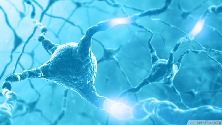 Nerve Impulses Travel As Fast As 170mph (274Km/h) ❥❥❥ http://bestpickr.com/interesting-facts-about-human-body