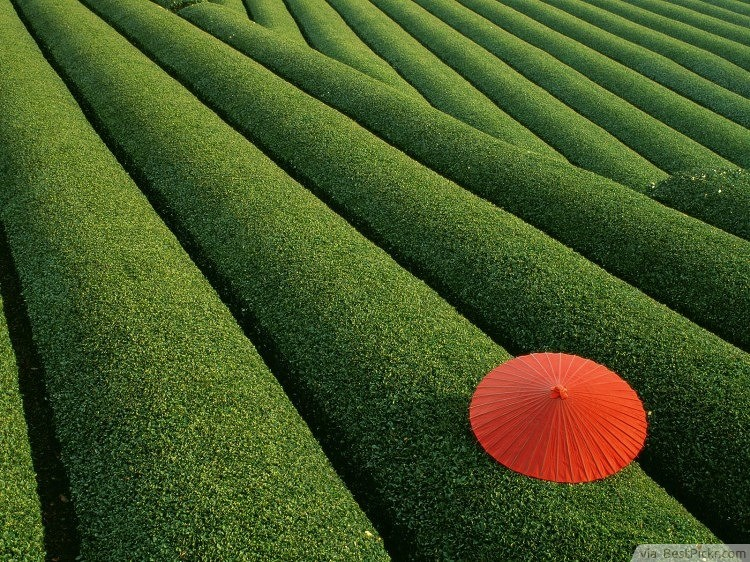 Fields Of Tea China Bestpickr Most Beautiful Places To Visit