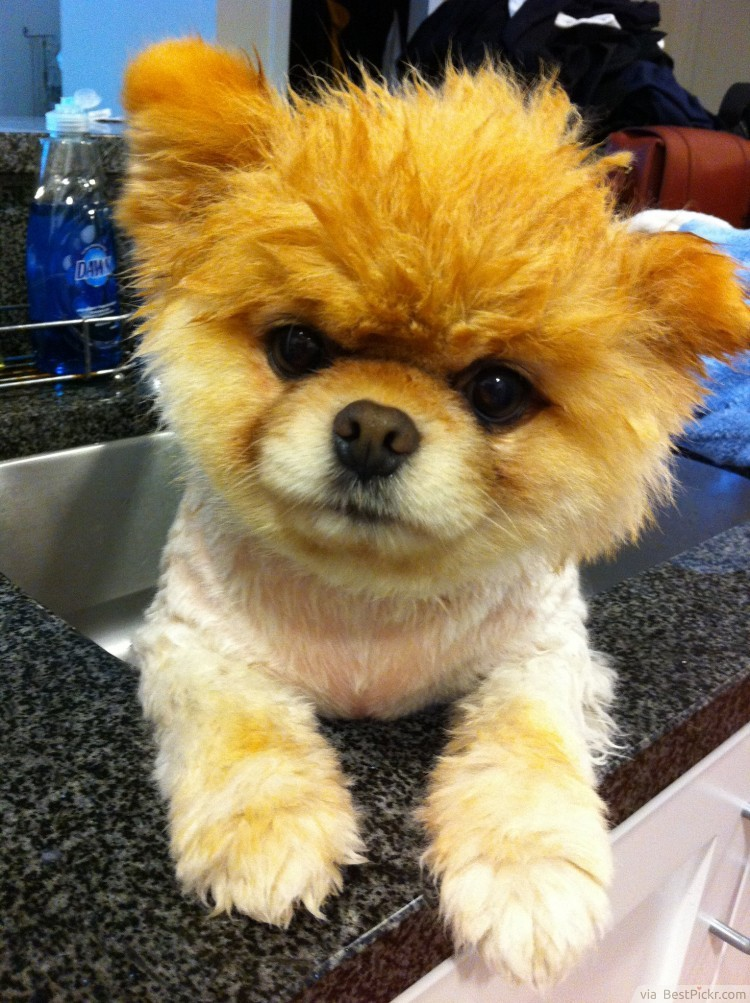 Like A Fluffy Toy Doggy Bathtime Http Bestpickr Com Cutest Dog In The World Boo