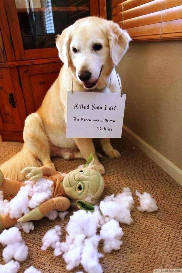 Top 10 Funny Dog Pictures With Captions That Make You Laugh Like