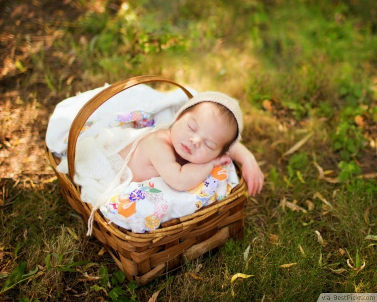 Tiny Newborn Baby Sleeping In Basket Bestpickr Cute Girls Boys Photos