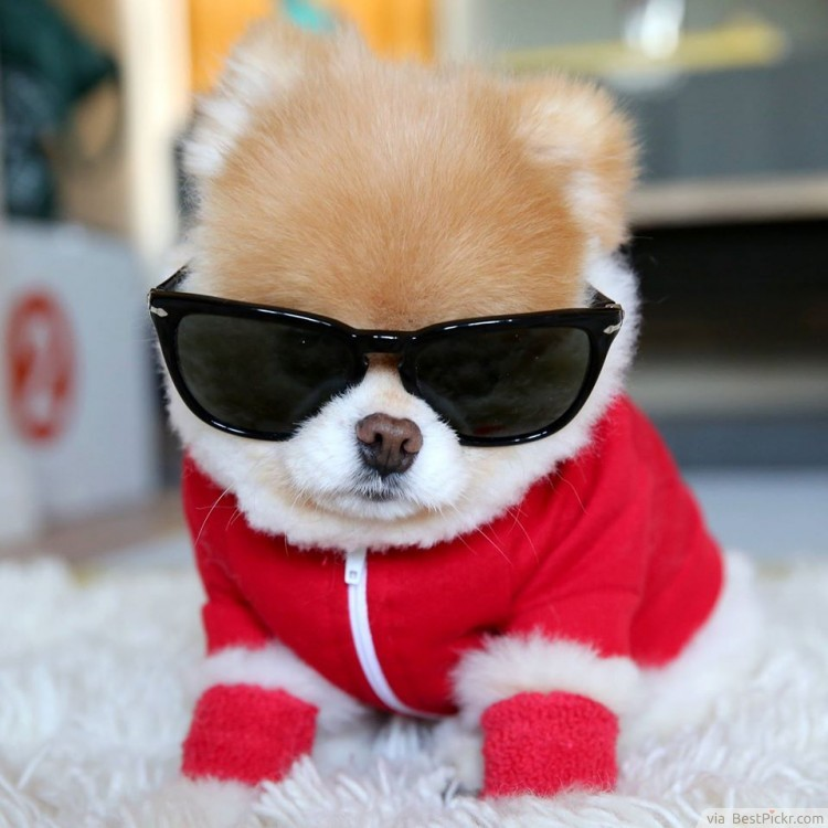 Cute Dog Christmas 19 Best Dog Christmas Clothes And Costumes 9 Is